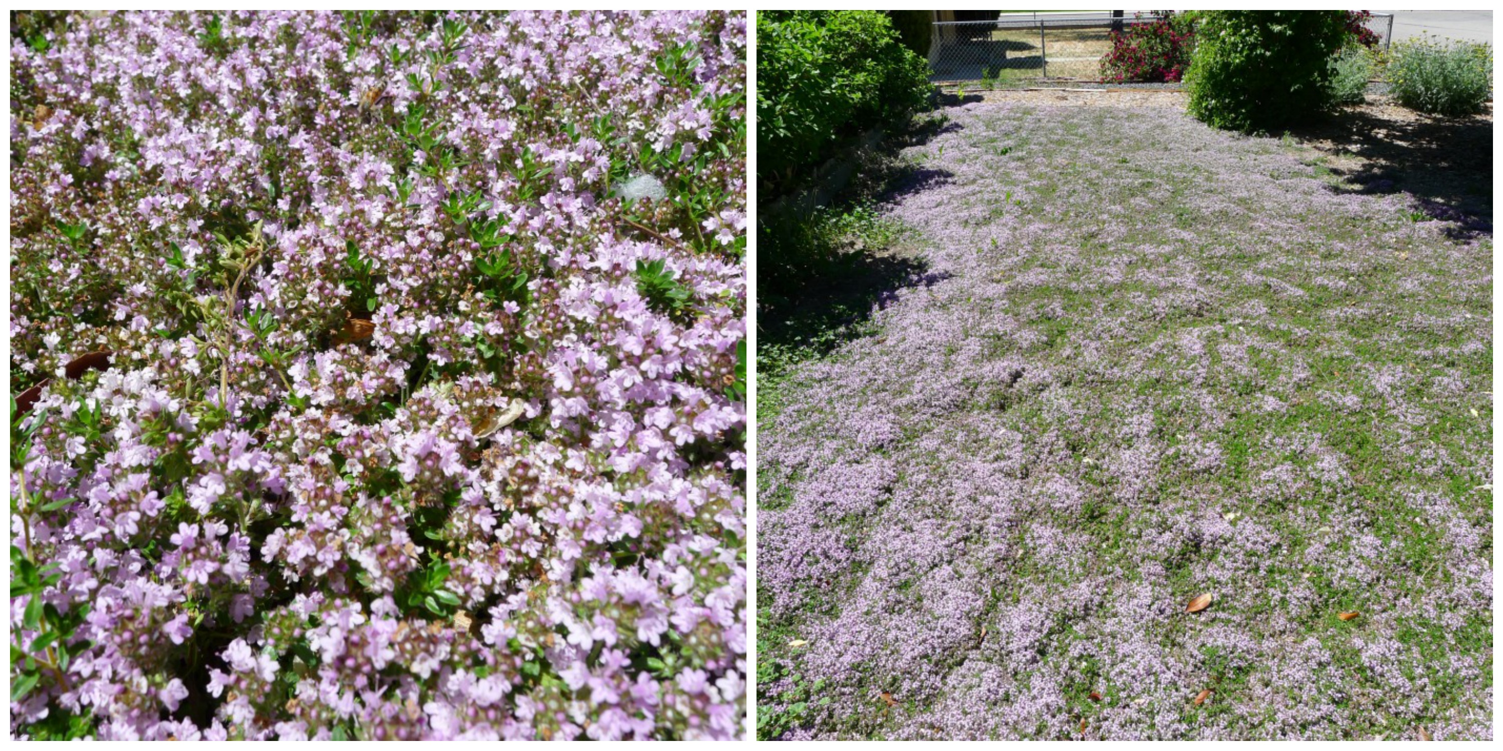 june thyme collage